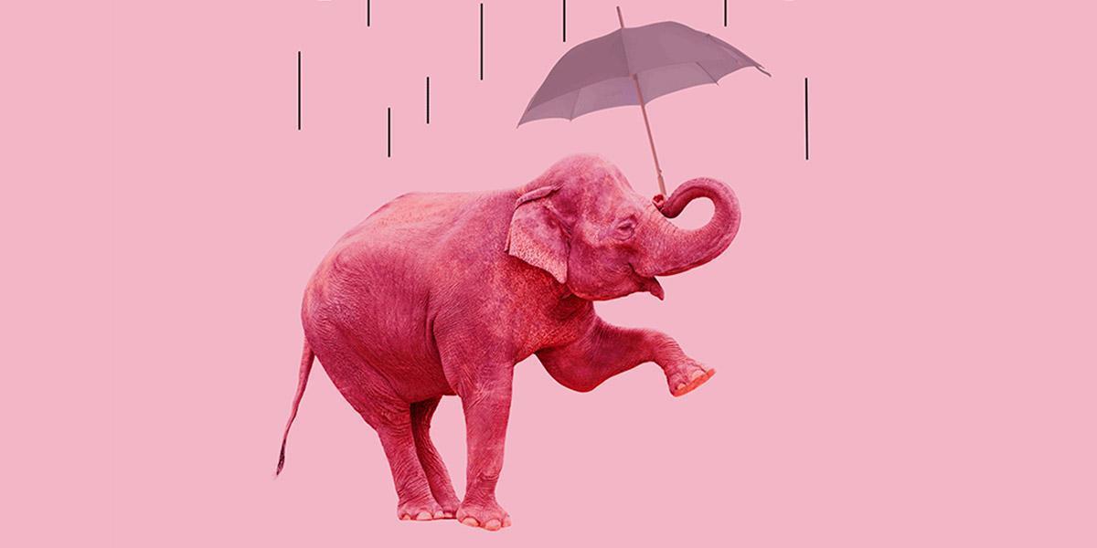 Sala BBK 30 Elefantes